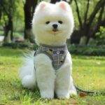 Nylon-Mesh-Kitten-Puppy-Reflective-Dogs-Harness-And-Leash-Set-Dogs-Vest-Harness-Leads-Pet-Clothes-For-Small-Dogs